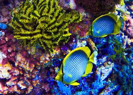 free images sea water nature ocean diving wildlife