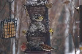 bird friendly native plants audubon bird friendly backyards audubon texas