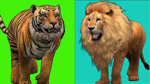 lion finger family song tiger king kong animal cartoon finger