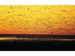 North Dakota wildlife tours images View north dakota 39 s wondrous wildlife official north dakota jpg
