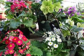 33 best plants for birds russell u0027s garden center