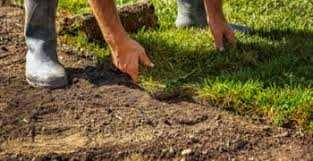 Landscaping Columbia Sc by Sod Columbia Sc Chop Chop Landscaping Columbia Sc