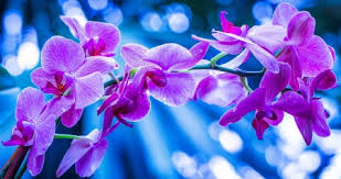 purple orchids purple orchids background other abstract background wallpapers