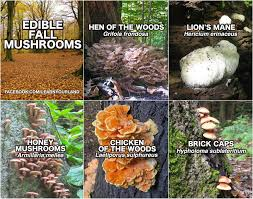 fungi foraging pittsburgh page 2
