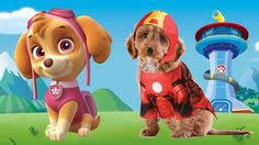 paw patrol chase dogs fun paw patrol cartoon