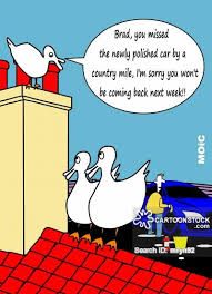 bird cartoons comics funny pictures cartoonstock