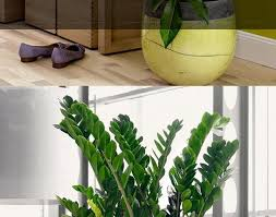 plant easy house plants awesome popular house plants 19 best