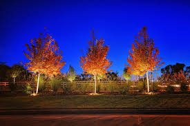outdoor and landscape lighting nelson landscaping