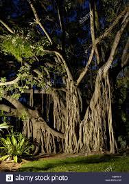 Brisbane Botanic Gardens Mount Coot Tha by Brisbane Botanic Gardens Stock Photos U0026 Brisbane Botanic Gardens