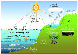 global warming causes and effects ozone layer depletion causes effects and solutions