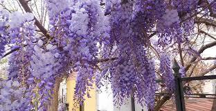 Plants For Pergolas by Ask Wet U0026 Forget Our 7 Favorite Climbing Plants To U201cwow U201d Your