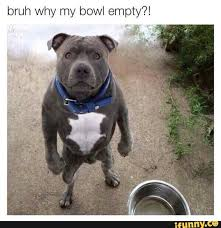 Cool Dog Meme - 207 best animals images on pinterest baby puppies pets and funny
