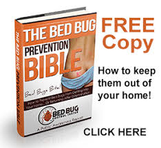 How To Avoid Bed Bugs How To Prevent Bed Bugs