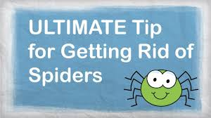 I Tried Killing A Spider - how to get rid of spiders naturally best repellent for getting