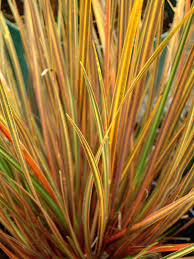 graceful ornamental grasses will add motion and texture to your
