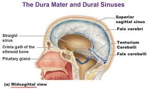Blood Brain Barrier Anatomy Protection For The Brain Meninges Csf Blood Brain Barrier