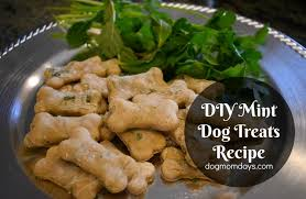 recipe for dog treats mint dog treats recipe dog days