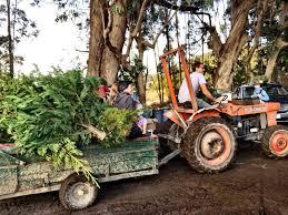 100 best christmas tree farms santa cruz santa cruz