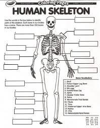 human skeleton quiz u2013 hd m com