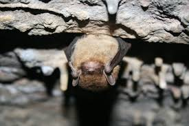 small bat 13 awesome facts about bats u s department of the interior