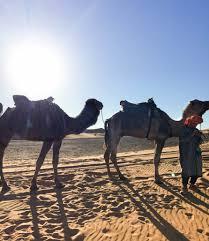 sahara desert u2013 the el stories