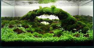 home accessories large container awesome aquascape designs for