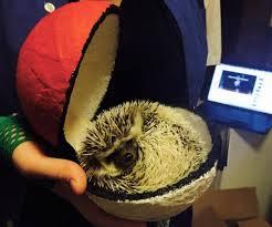 Hedgehog Halloween Costume Piggie