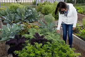 vegetable garden texas foot ing plan u suburbs of north my