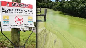 special report on the algae blooms that are ravaging florida u0027s