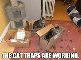 Working Cat Meme - cat traps are working