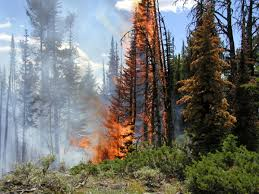 Wyoming forest images Free stock photo of forest fire in yellowstone national park jpg