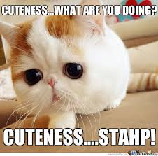 Stahp Meme - cuteness stahp by raisekain meme center