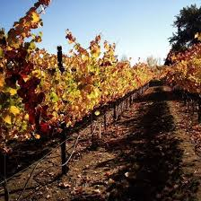 24 fall wine country images wine country