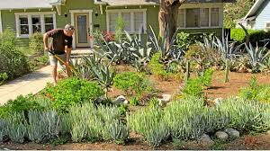 southern california native plants landscaping experts offer advice for drought tolerant landscaping in southern