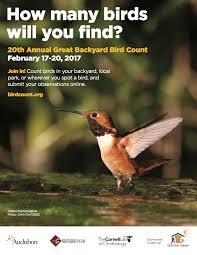 ebird centroamérica page 3