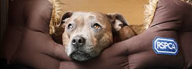 pet bereavement pet bereavement and help coping with pet loss rspca advice