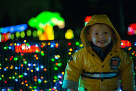 Zoo Lights Oregon by Photos Walk Through A Wild Winter Wonderland At Zoo Lights Katu