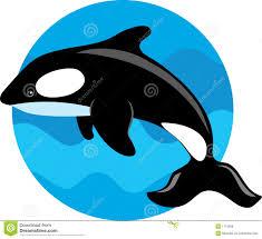 beluga clipart black and white pencil and in color beluga