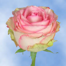 send roses send roses global