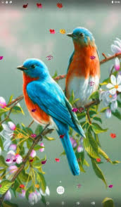 bird wallpaper bird wallpaper love birds live wallpaper saxony blue anna design