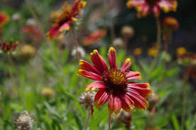 native plants of arizona arizona resources audubon arizona