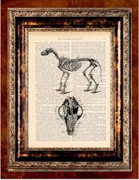 Dog Anatomy Book 59 Best Artsy Fartsy Images On Pinterest Animals Artsy Fartsy