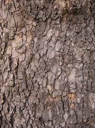 best 25 oak tree bark ideas on tree bark wood bark