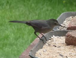 Pennsylvania birds images Glassblower info backyard birds holland bucks county JPG