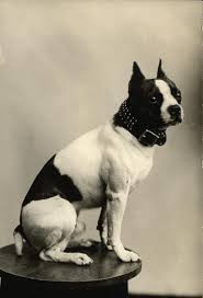 hair style names1920 which dog breed was most popular the year you were born rover com