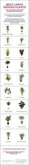 splendid best indoor plant 56 best indoor tropical plants low