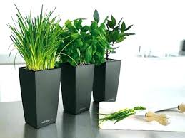 plants for office desk best desk plants office plants that require no sunlight office desk