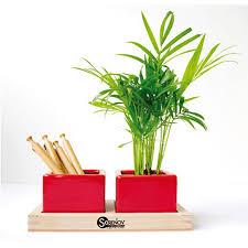 plante d駱olluante bureau plateau nature au bureau avec plante publicitaire personnalisé