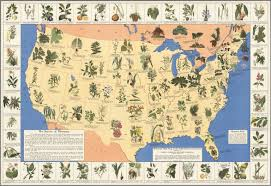 United States Of America State Map by Medicinal Plant Map Of The United States Of America David Rumsey