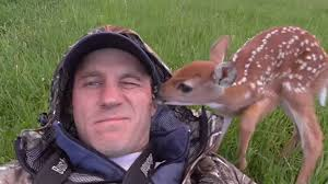 man rescues and releases abandoned baby deer in sweet video